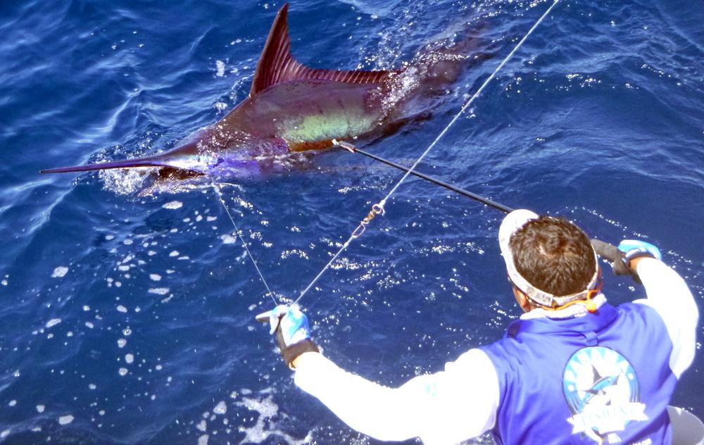 Links | Panama Big Game Fishing Club and Resort