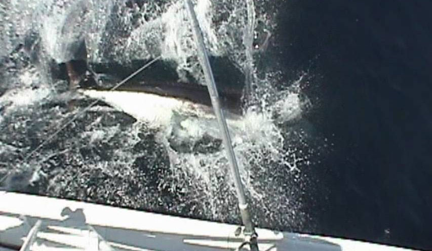 Marlin Fishing Packages