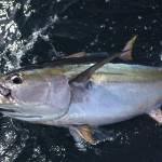 marlin_panama_big_game_fishing22