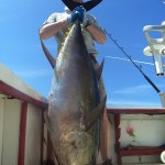 marlin_panama_big_game_fishing3