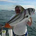 roosterfish_panama_big_game_fishing2