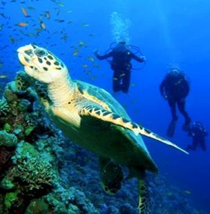 Scuba Diving Islas Secas & Isla Ladrones
