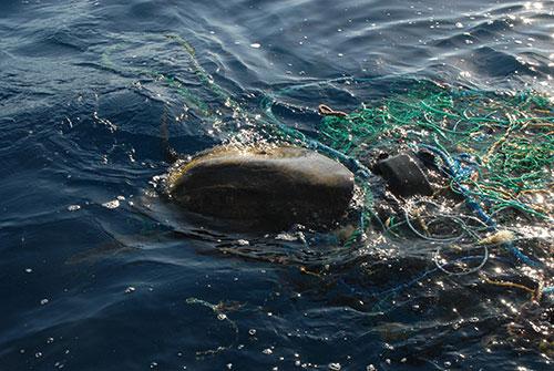 Panama Turtle Conservation